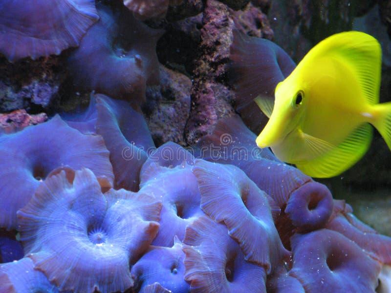 Linguetta gialla fotografia stock libera da diritti