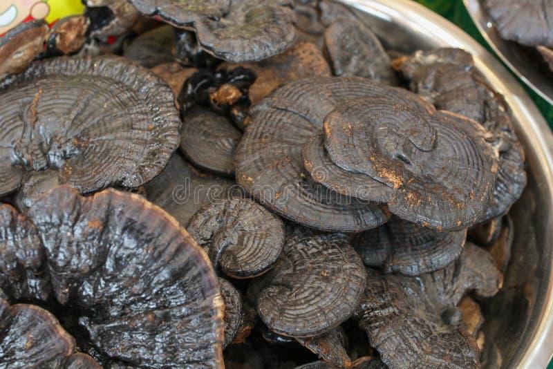 Download Lingzhi Pieczarki Cięcia Ganoderma Suchy Lucidum Zdjęcie Stock - Obraz złożonej z bubel, kopiasty: 106907210