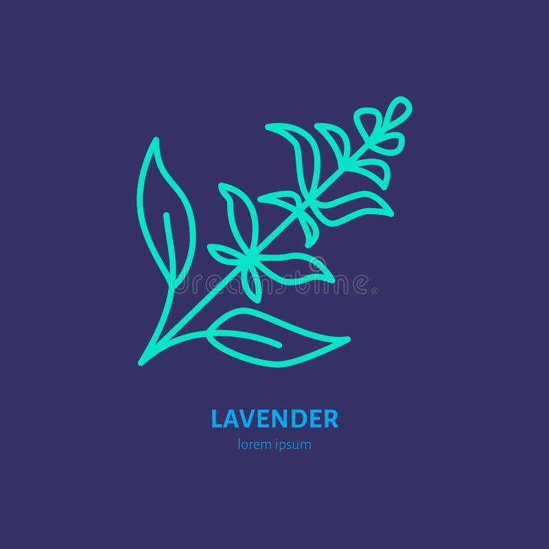 Linha ícone do vetor de grupo da alfazema Sinal erval dos óleos essenciais, aroma floral ilustração royalty free