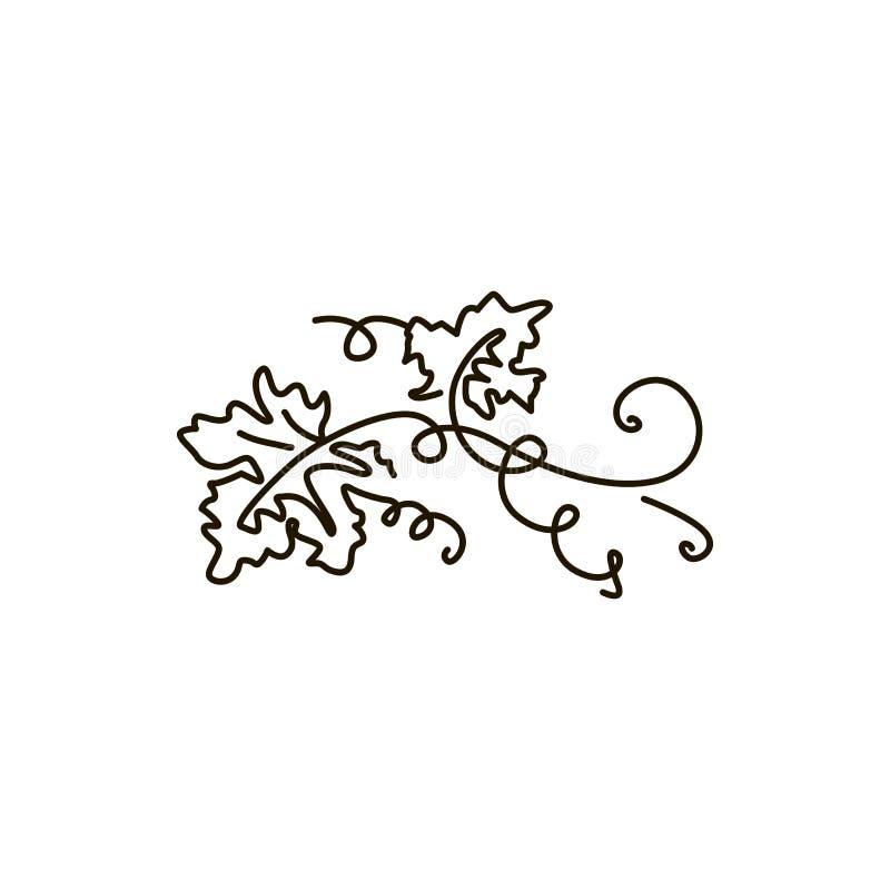 Linha ícone do vetor Folhas da uva Um a lápis desenho Isolado no fundo branco ilustração royalty free