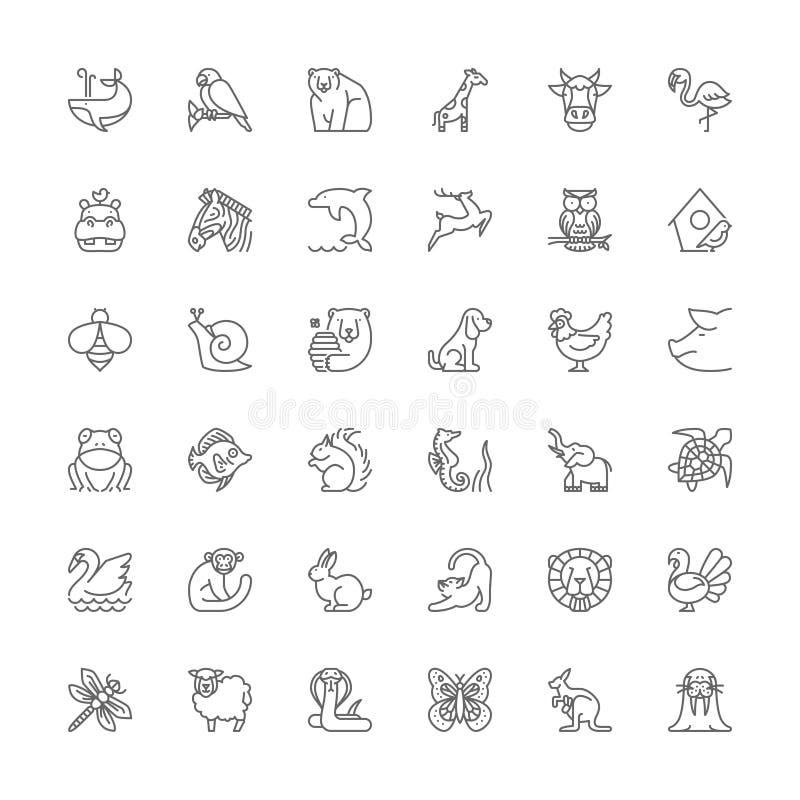 Linha ícones animais ilustração royalty free