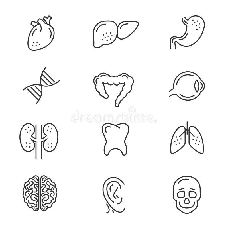 Linha ícones dos órgãos humanos ilustração do vetor