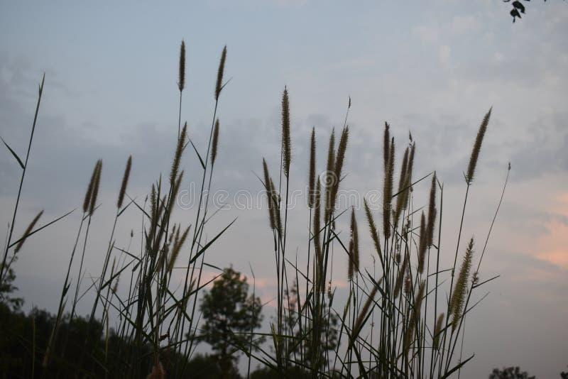 Linha agradável do céu quando o sol for para baixo por do sol em minha casa fotos de stock