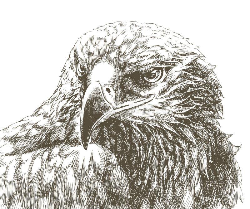 Linha arte da águia ilustração stock