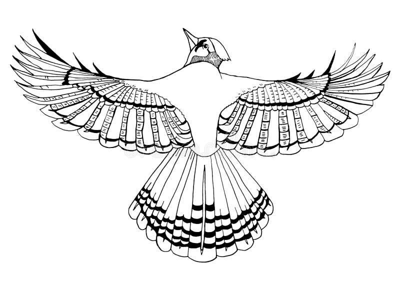 Linha arte do pássaro preto e branco ilustração royalty free