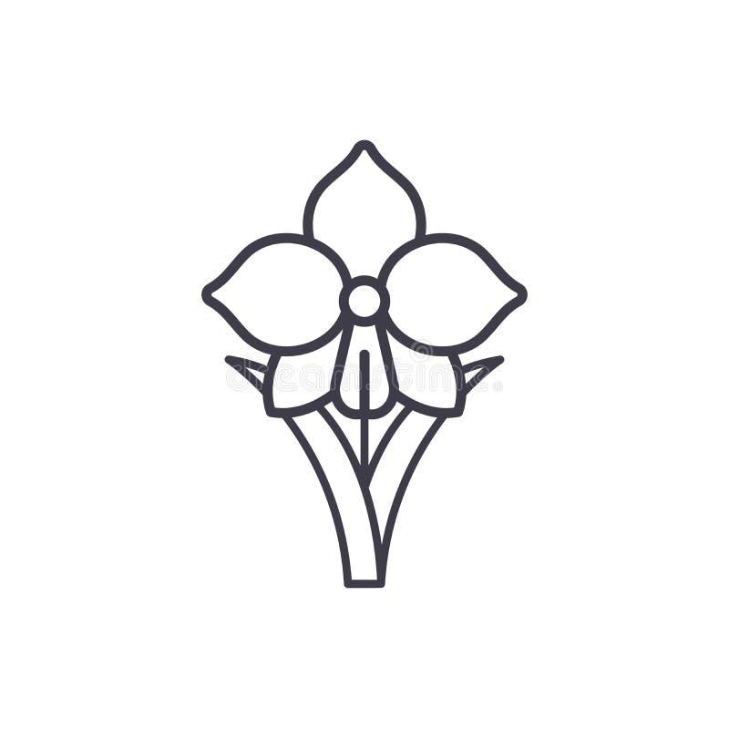 Linha conceito do narciso amarelo do ícone Sinal liso do vetor do narciso amarelo, símbolo, ilustração ilustração stock