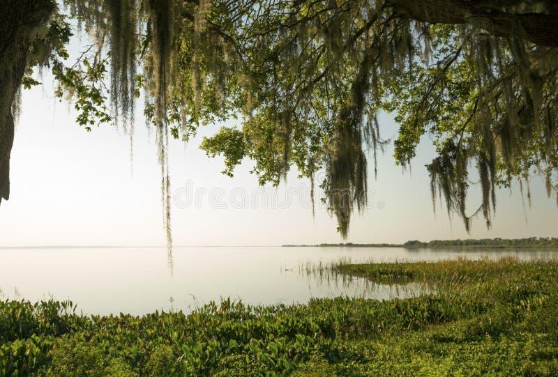 Linha costeira do fim da tarde de lago cênico Apopka em Florida imagens de stock royalty free