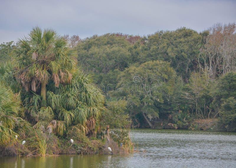 Linha costeira em Kathryn Abbey Hanna Park, o Condado de Duval, Jacksonville, Florida imagens de stock royalty free