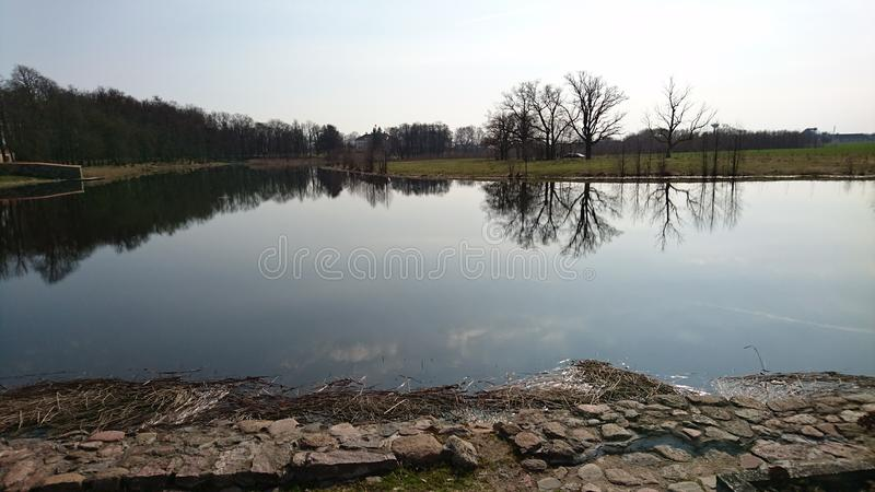 Linha de árvore espelhada no lago imagem de stock