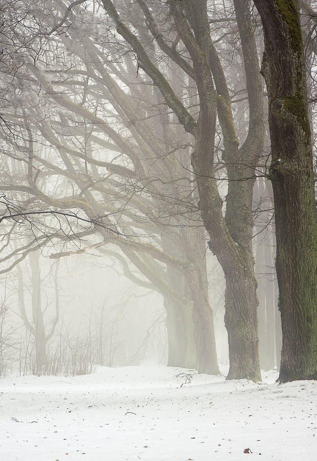 Linha de árvore nevoenta imagens de stock royalty free
