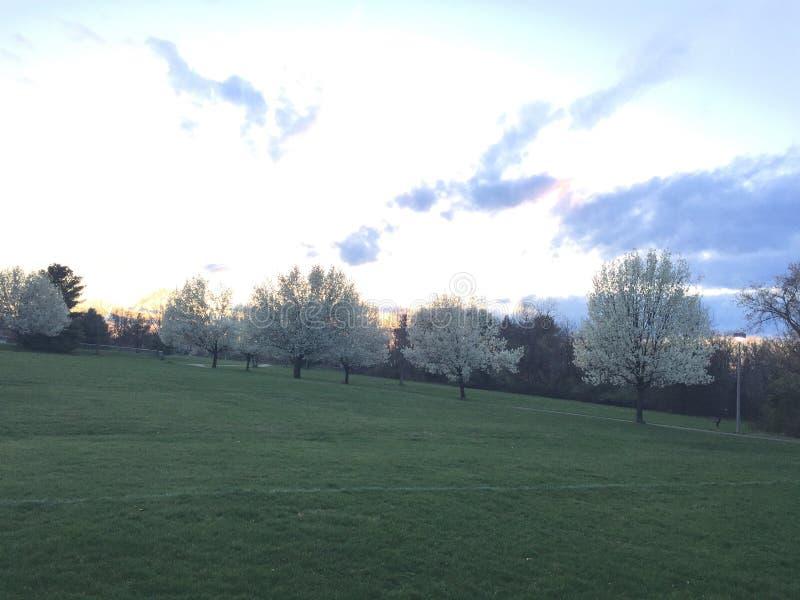 Linha de árvore no crepúsculo na mola adiantada, árvores de florescência imagem de stock royalty free