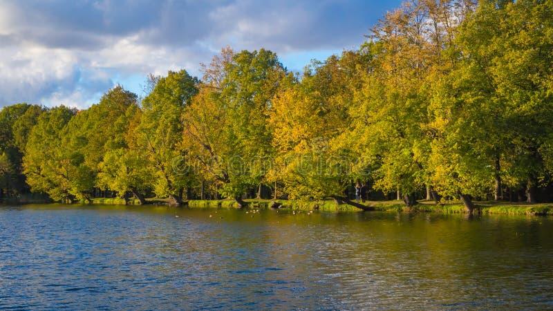 Linha de árvores do outono perto da lagoa fotografia de stock