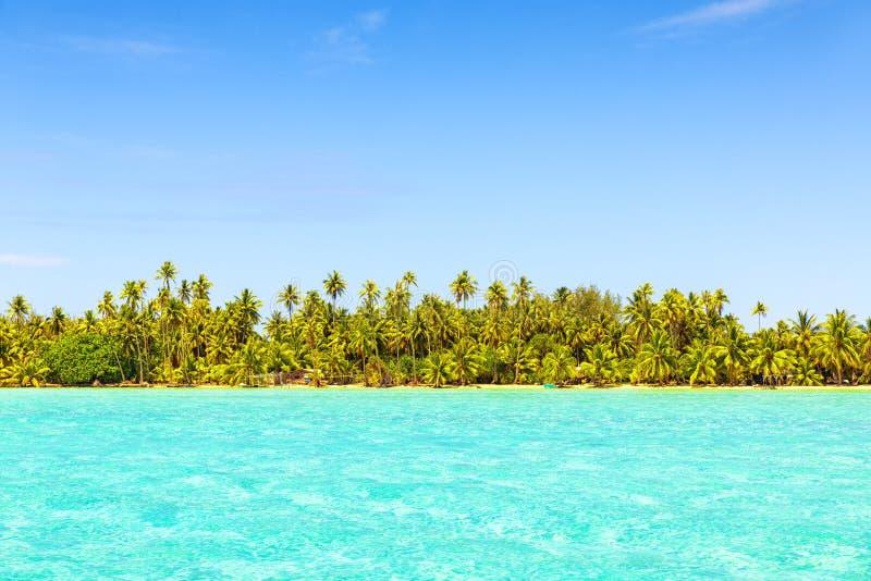Linha de palmeiras do coco com o mar de turquesa na praia tropical imagens de stock