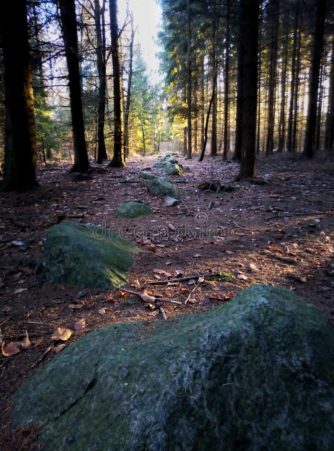 Linha de pedras na floresta foto de stock royalty free