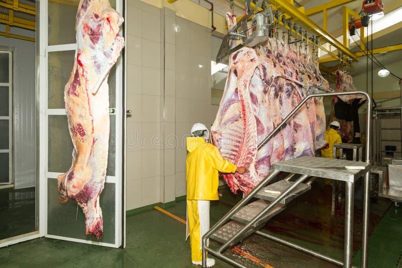 Linha de produção do gado em um matadouro imagens de stock royalty free