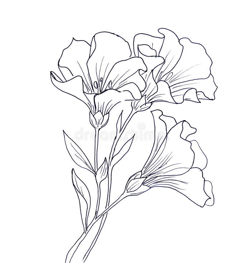 Linha desenho da tinta da flor ilustração do vetor