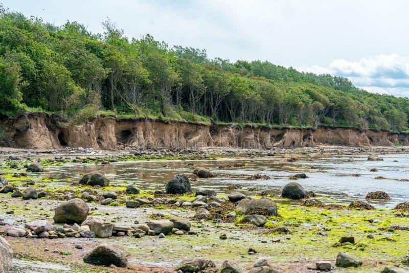 Linha do penhasco na costa do weast da ilha alemão Poel fotografia de stock royalty free