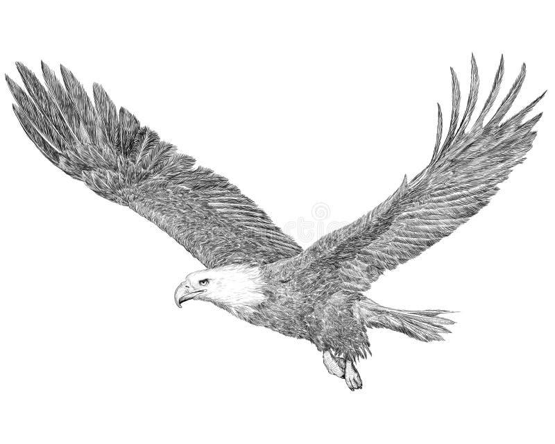 Linha do preto do esboço da tração da mão do voo da águia americana no fundo branco ilustração royalty free