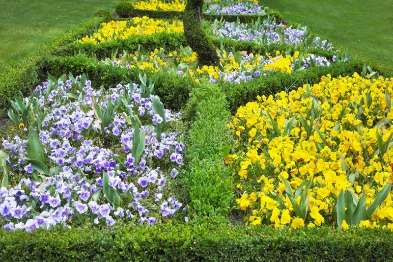 Linha dos arbustos e da flor imagens de stock royalty free