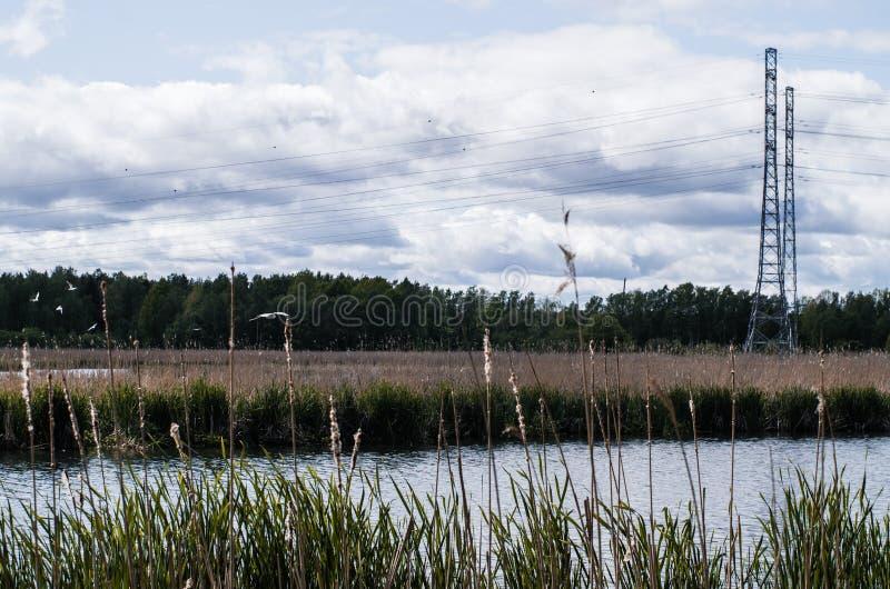 Linha elétrica perto do lago foto de stock