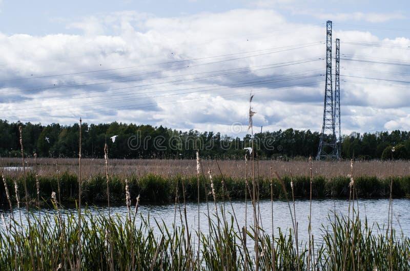 Linha elétrica perto do lago imagem de stock royalty free