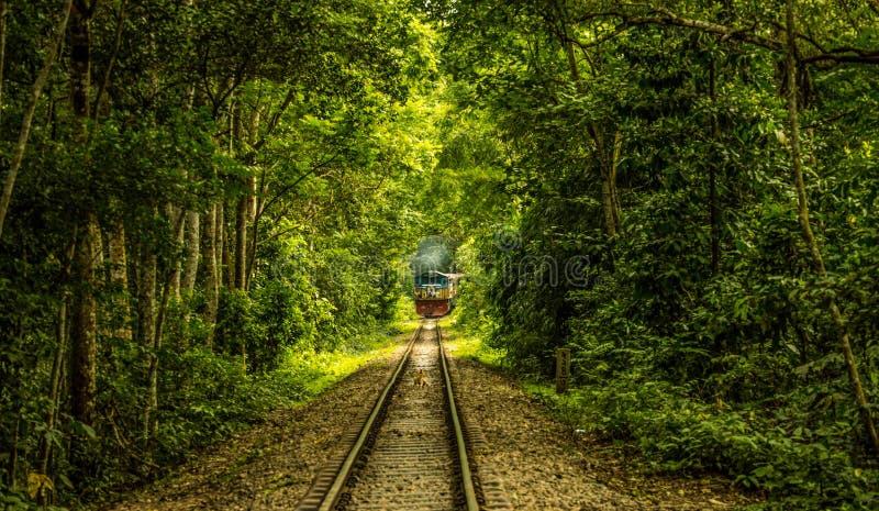 Linha ferroviária na floresta fotos de stock royalty free