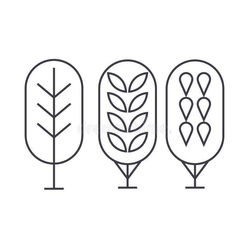Linha fina conceito da árvore de vidoeiro do ícone Sinal linear do vetor da árvore de vidoeiro, símbolo, ilustração ilustração royalty free