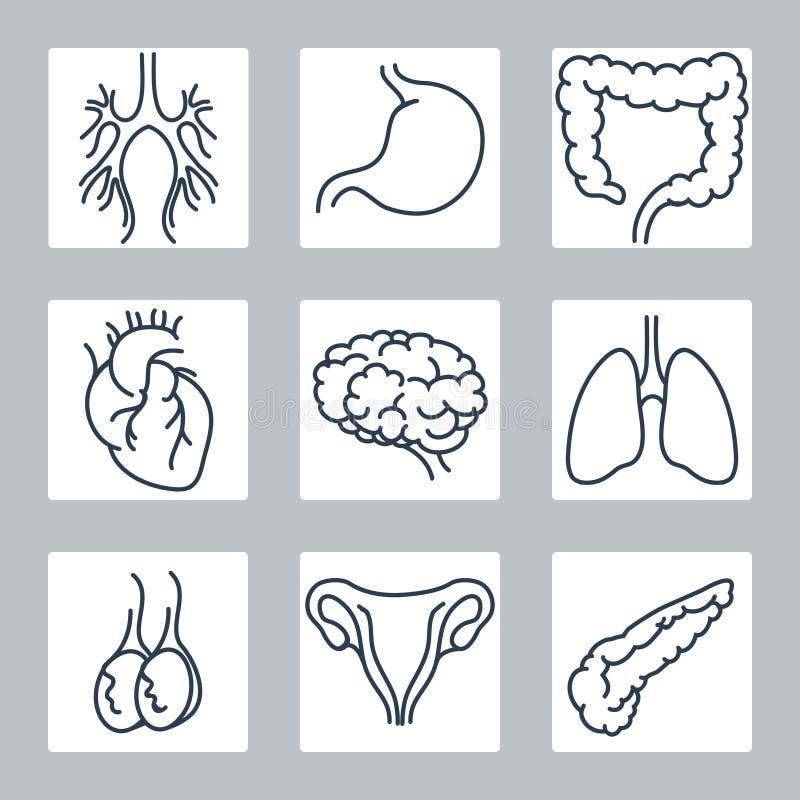 Linha humana ícones dos órgãos internos ajustados ilustração stock