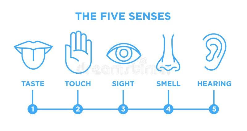 A linha infographic grupo do vetor de cinco sentidos dos ícones ilustração stock
