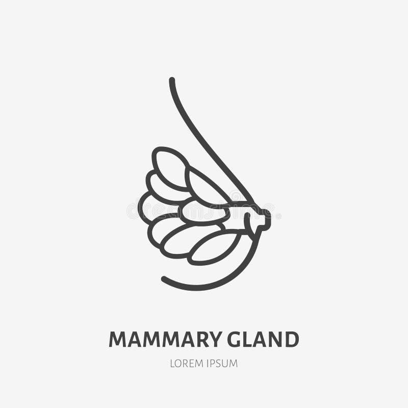 Linha lisa ícone da glândula mamário Pictograma fino do vetor da anatomia fêmea do peito, ilustração do esboço para a clínica méd ilustração royalty free