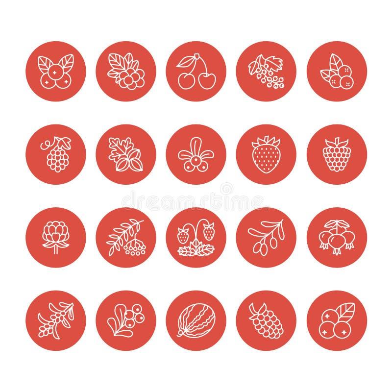 Linha lisa ícones das bagas da floresta - mirtilo, arando, framboesa, morango, cereja, amora-preta da baga de Rowan Melancia ilustração do vetor