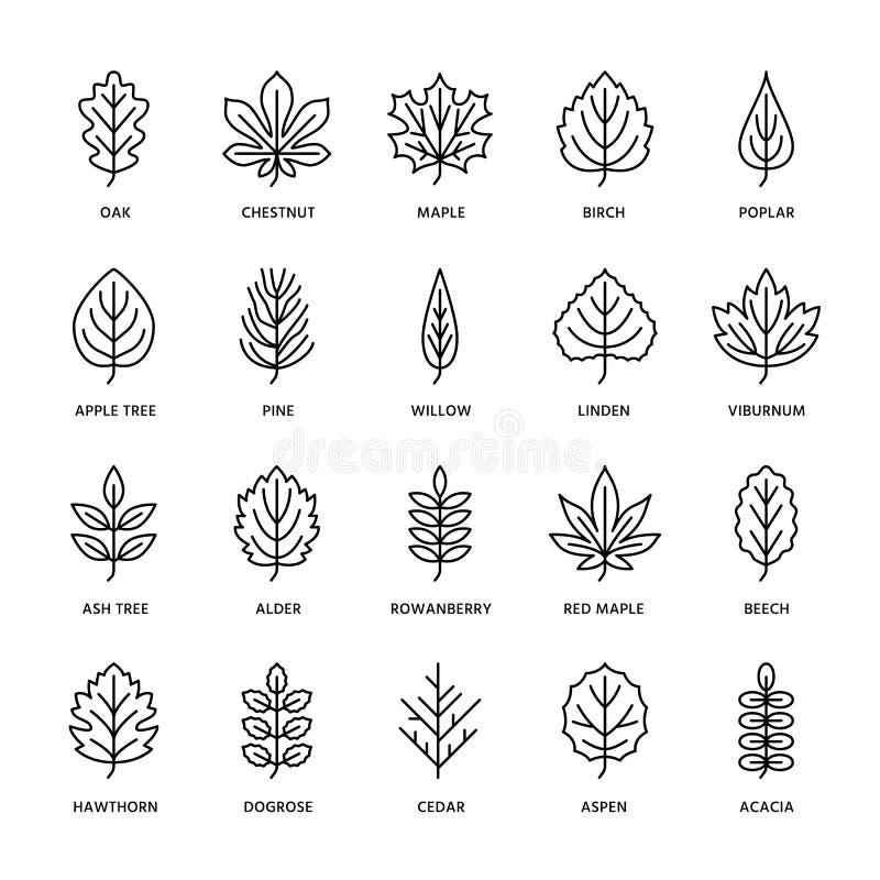 Linha lisa ícones das folhas de outono A folha datilografa, Rowan, árvore de vidoeiro, bordo, castanha, carvalho, pinho do cedro, ilustração royalty free
