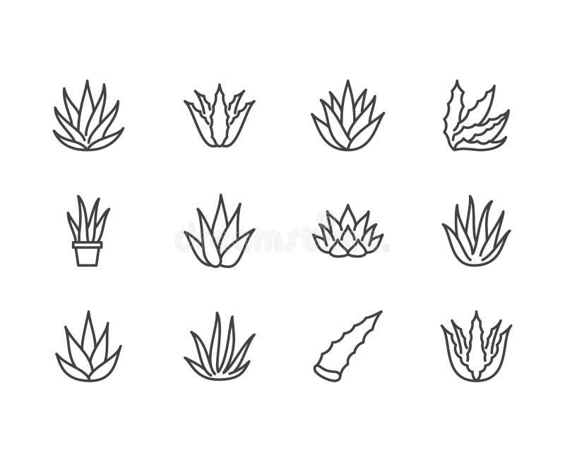 Linha lisa ícones de vera do aloés Planta carnuda, ilustrações do vetor da planta tropical, sinais finos para o alimento biológic ilustração royalty free