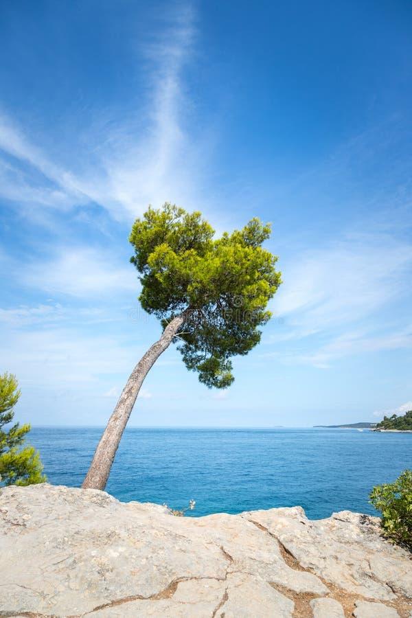 Linha litoral na Cro?cia: Ch? verde forte, oceano azul e c?u fotografia de stock