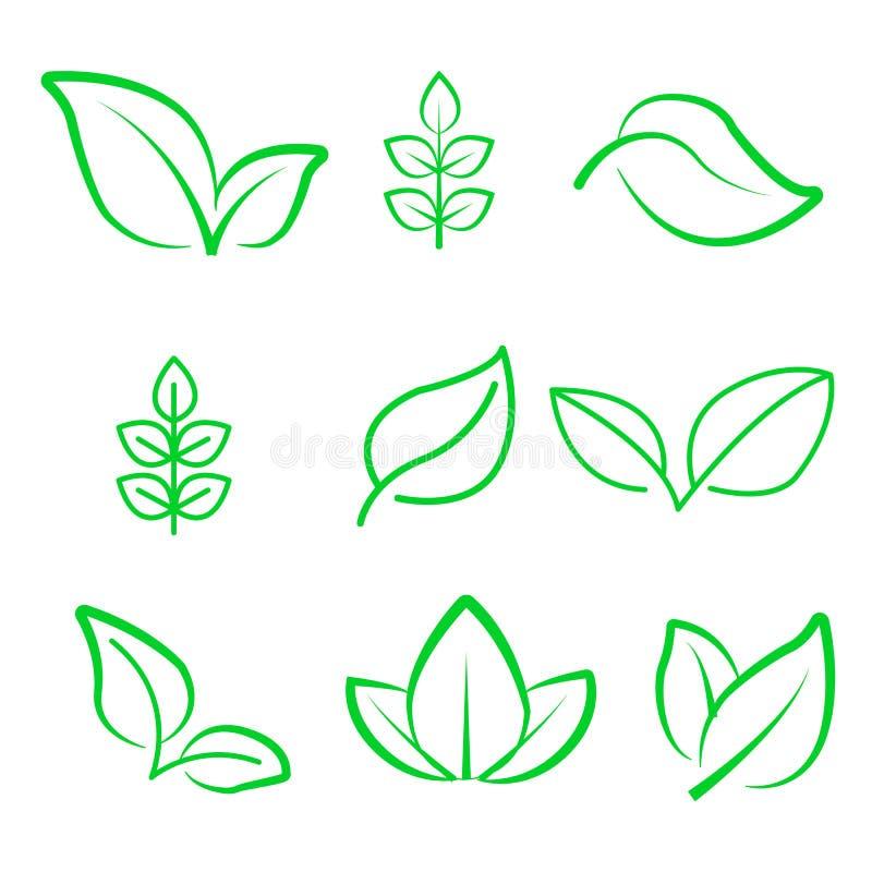 Linha natural ícone da folha Folhas novas das plantas, o carvalho da árvore de floresta, as folhas do olmo e da cinza e o verde d ilustração do vetor