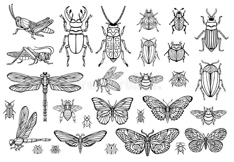 Linha tirada grupo da mão grande de erros dos insetos, besouros, abelhas do mel, traça da borboleta, zangão, vespa, libélula, gaf ilustração royalty free