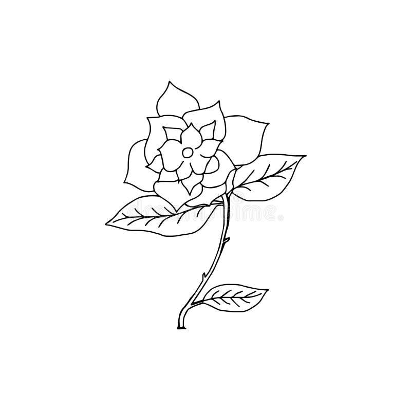 Linha tirada mão vetor de Rosa, arte das rosas, logotipo da ilustração ilustração stock