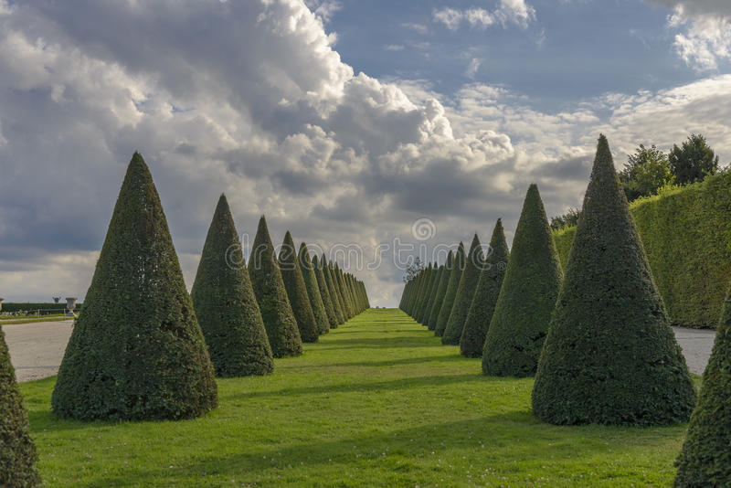 Linhas das conversão e gramado cônicos, castelo de Versalhes, França imagem de stock