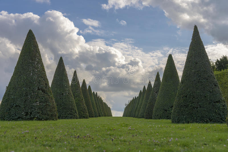 Linhas das conversão e gramado cônicos, castelo de Versalhes, França foto de stock royalty free