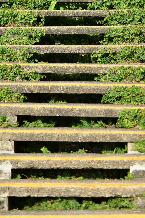 Linhas das escadas em um ambiente da natureza imagens de stock royalty free