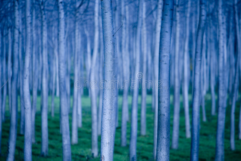 Linhas de árvores imagens de stock royalty free