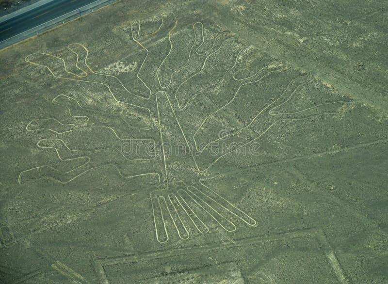 Linhas de Nazca: A árvore imagem de stock