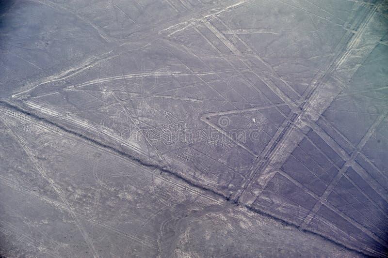 Linhas de Nazca - a aranha fotografia de stock royalty free