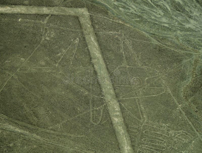 Linhas de Nazca: A baleia foto de stock royalty free