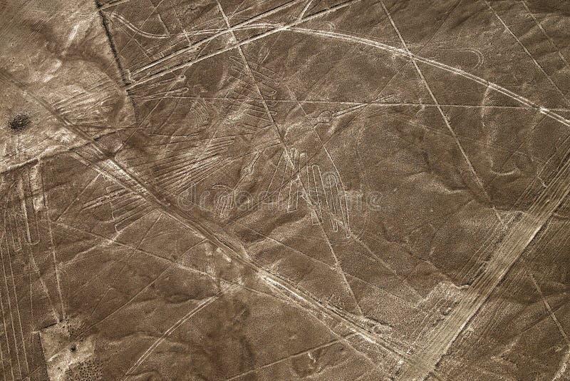 Linhas de Nazca da vista aérea do condor, Peru imagem de stock