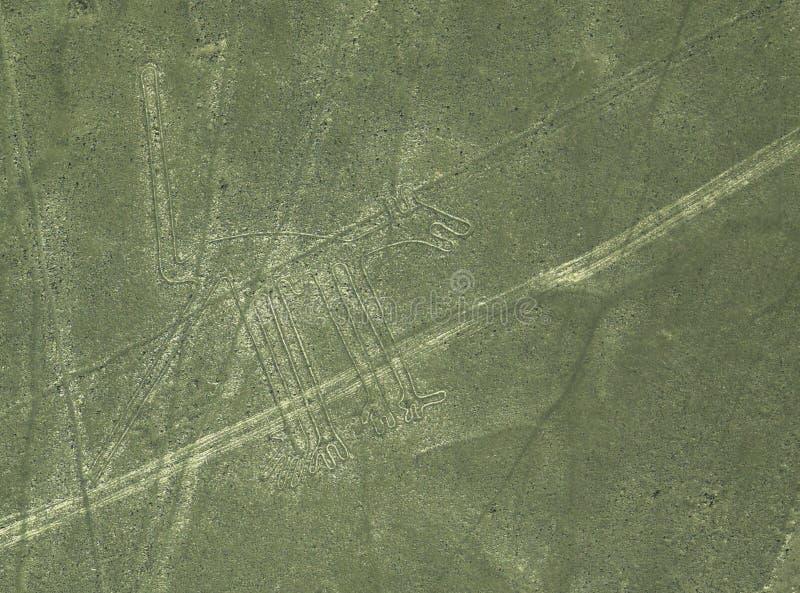 Linhas de Nazca: O cão fotos de stock
