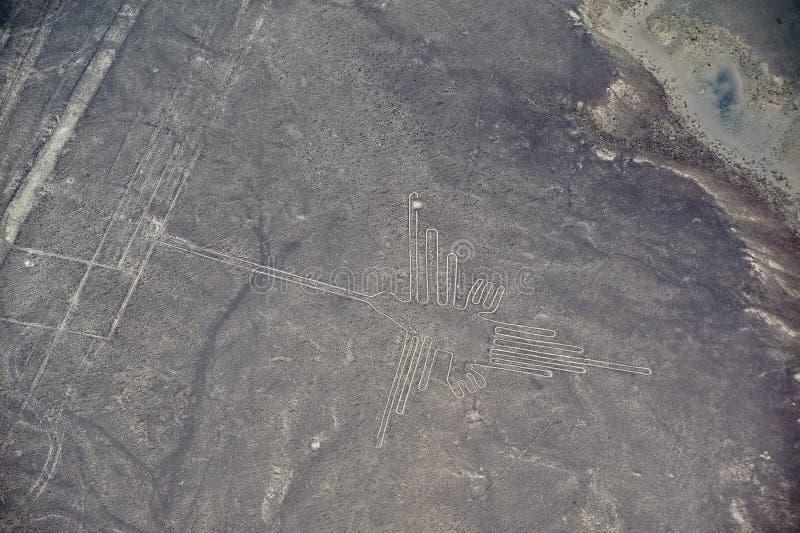 Linhas de Nazca - o colibri fotos de stock royalty free