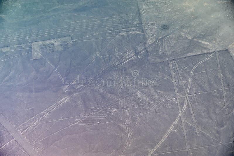 Linhas de Nazca - o condor fotografia de stock royalty free