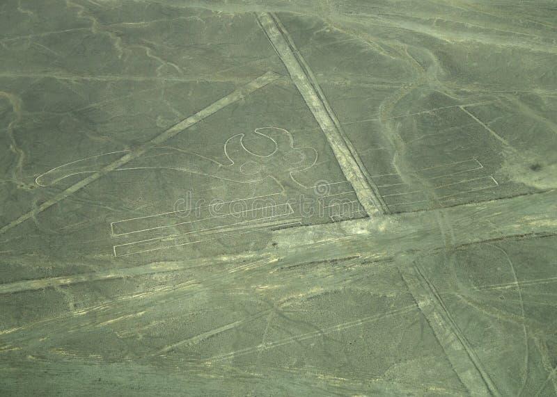 Linhas de Nazca: O papagaio imagem de stock
