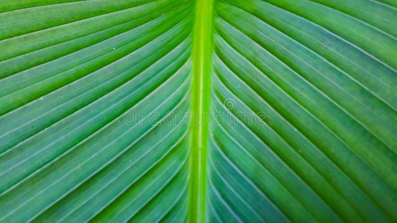 Linhas e testes padrões nas folhas da planta fotos de stock